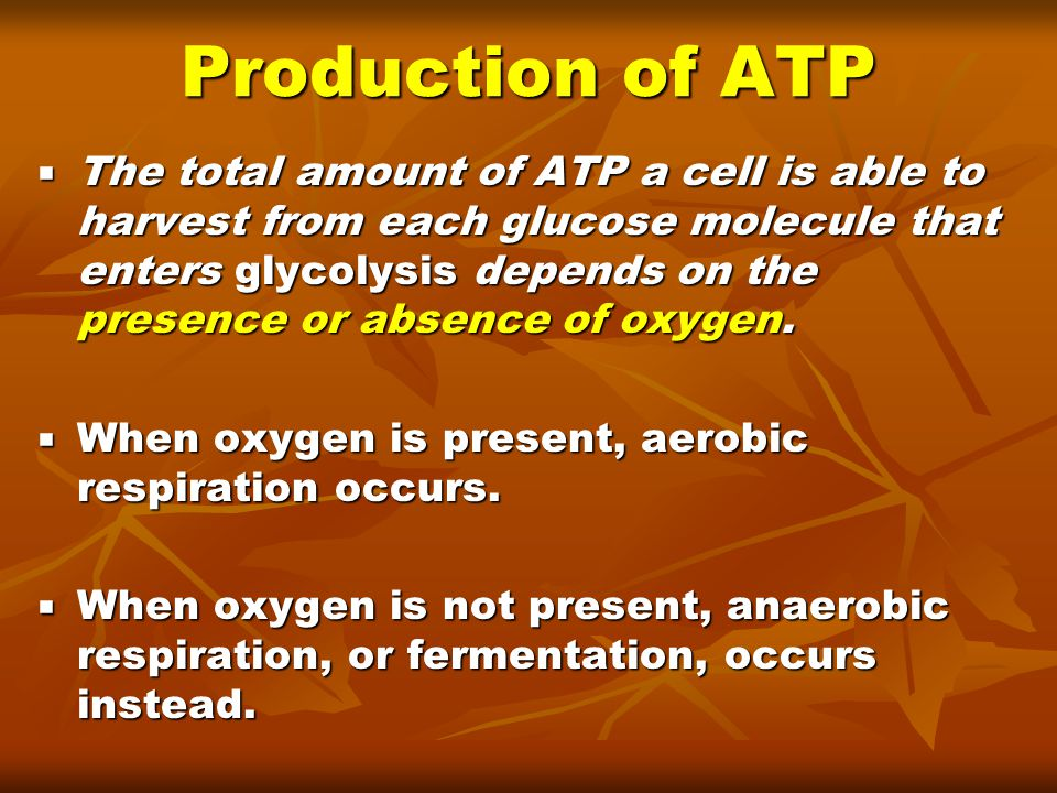 Production of ATP
