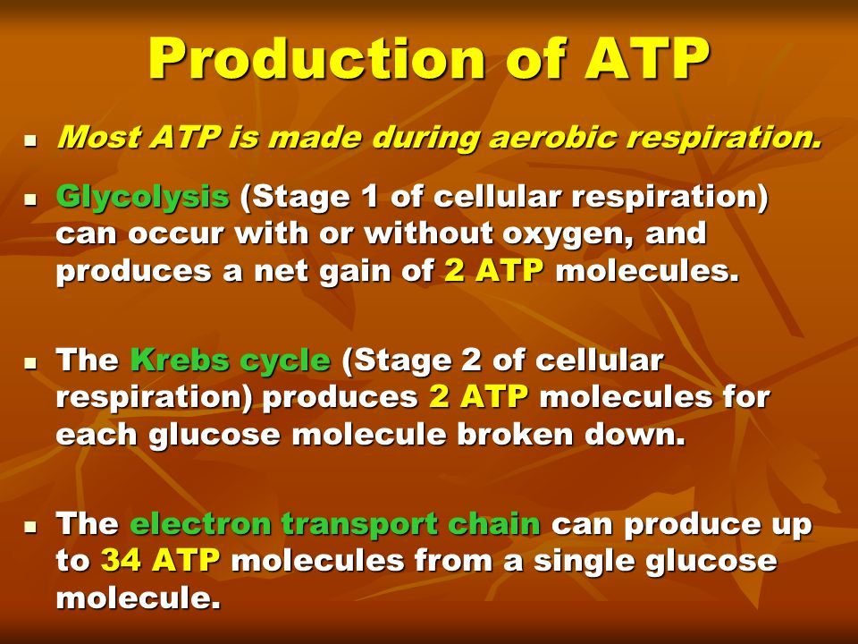 Production of ATP Most ATP is made during aerobic respiration.