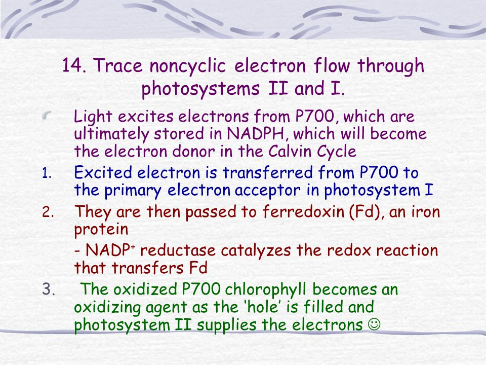 14. Trace noncyclic electron flow through photosystems II and I.