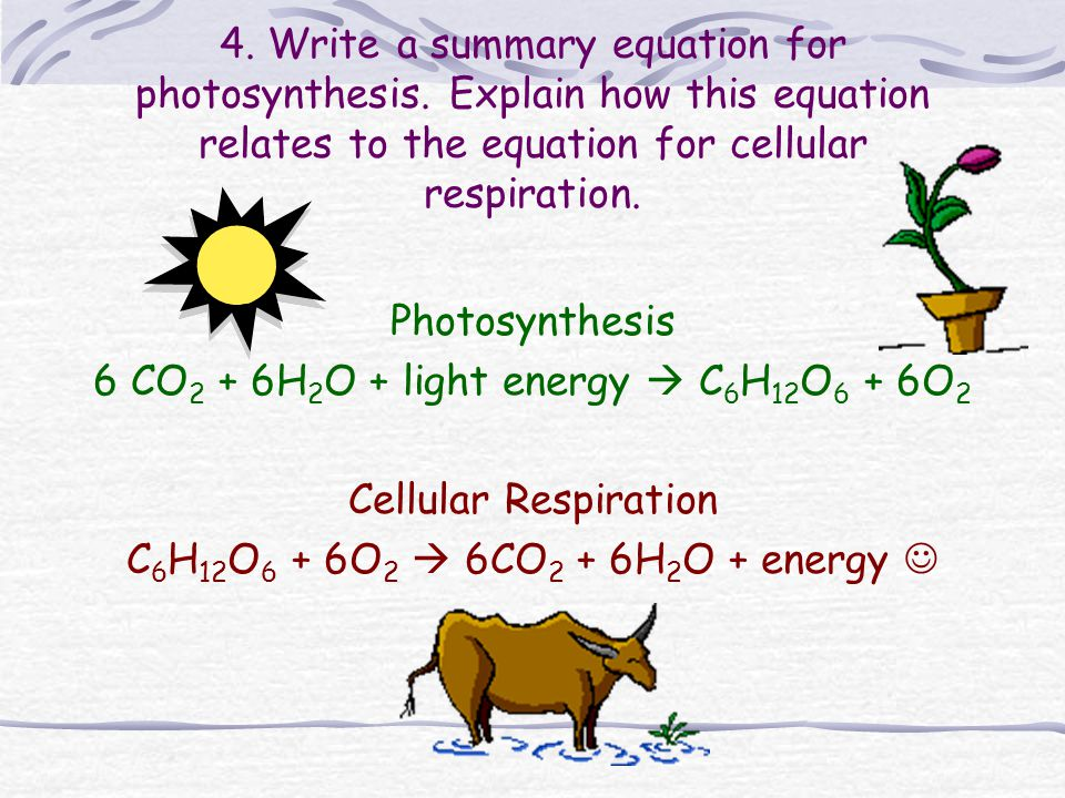 6 CO2 + 6H2O + light energy  C6H12O6 + 6O2