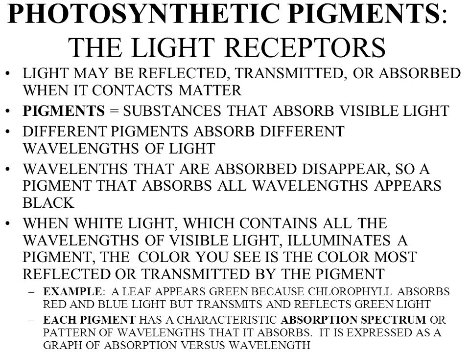 PHOTOSYNTHETIC PIGMENTS: THE LIGHT RECEPTORS