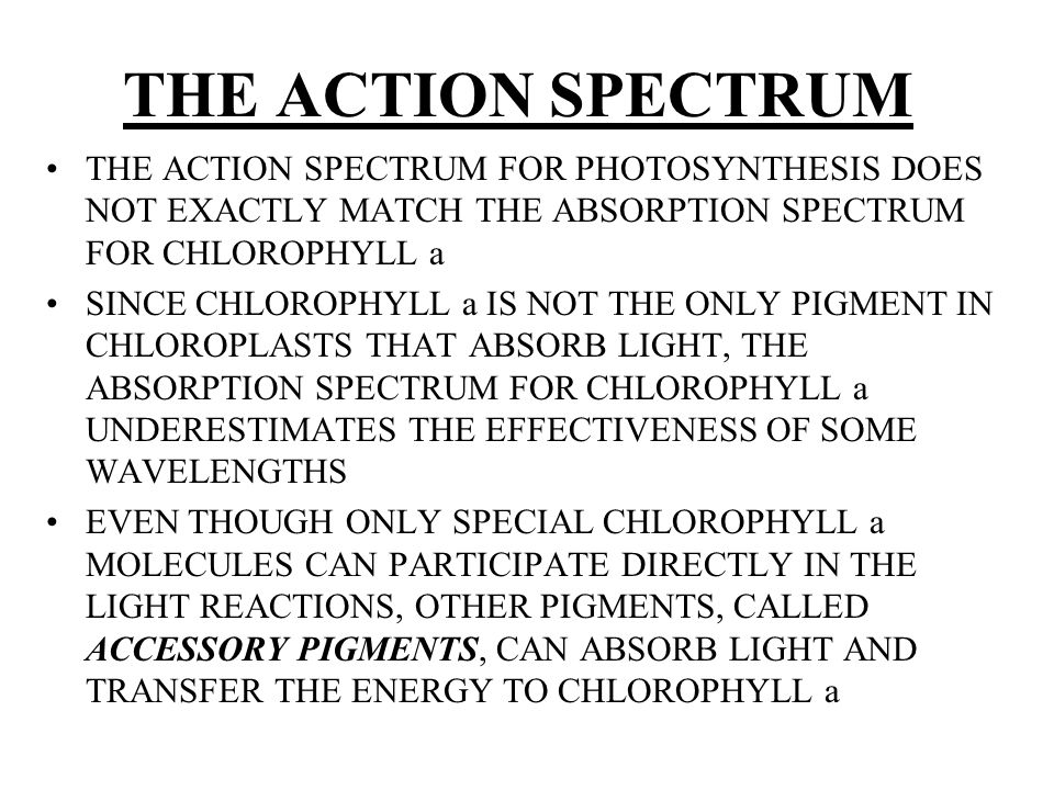 THE ACTION SPECTRUM THE ACTION SPECTRUM FOR PHOTOSYNTHESIS DOES NOT EXACTLY MATCH THE ABSORPTION SPECTRUM FOR CHLOROPHYLL a.