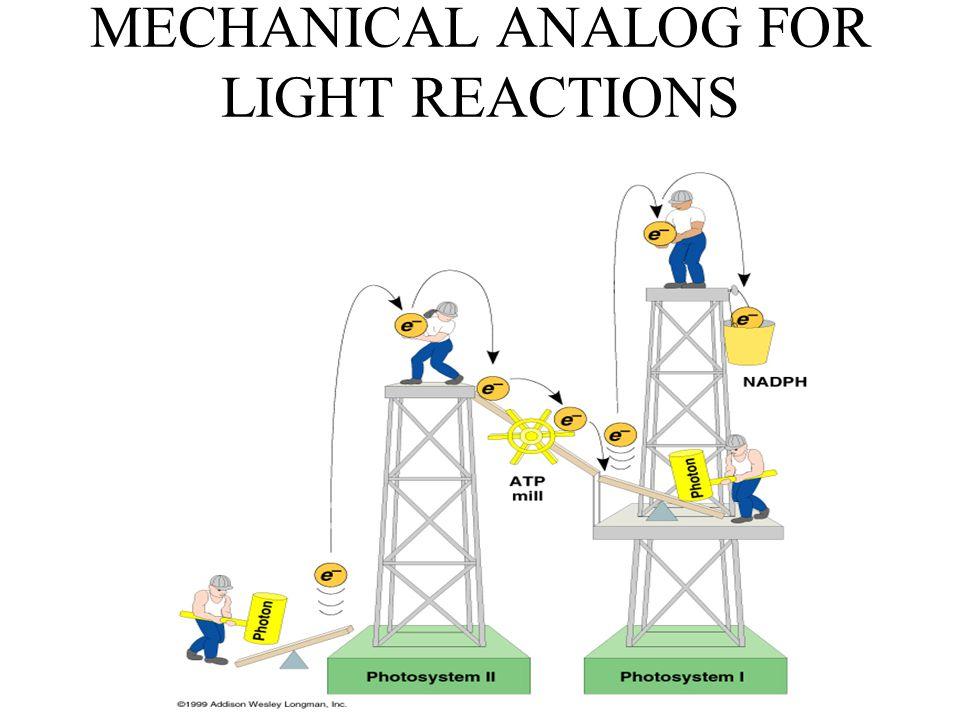 MECHANICAL ANALOG FOR LIGHT REACTIONS
