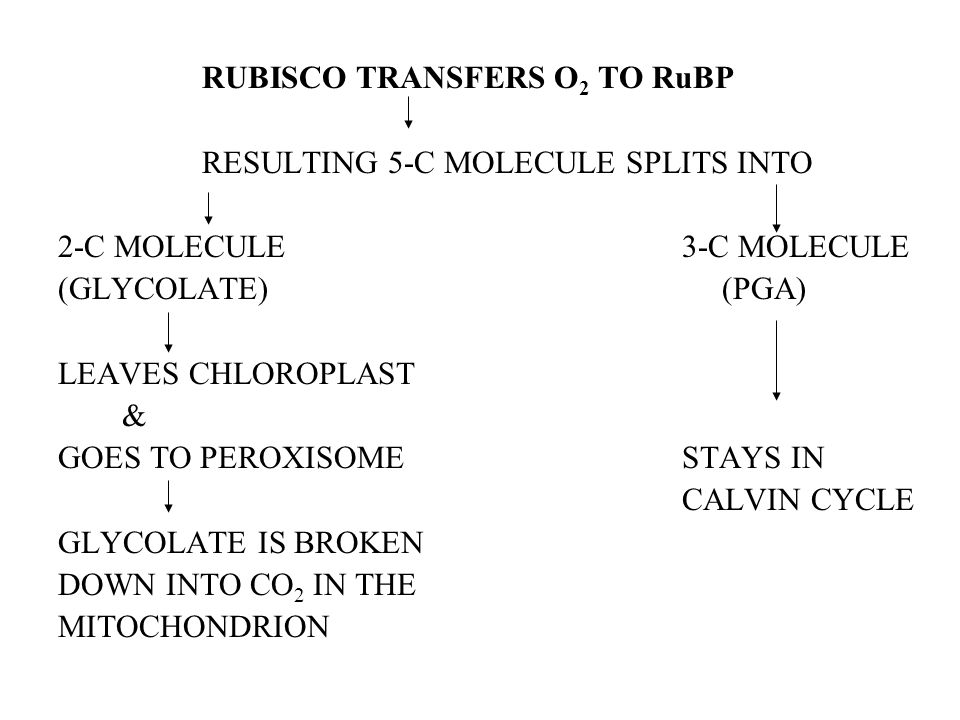 RUBISCO TRANSFERS O2 TO RuBP