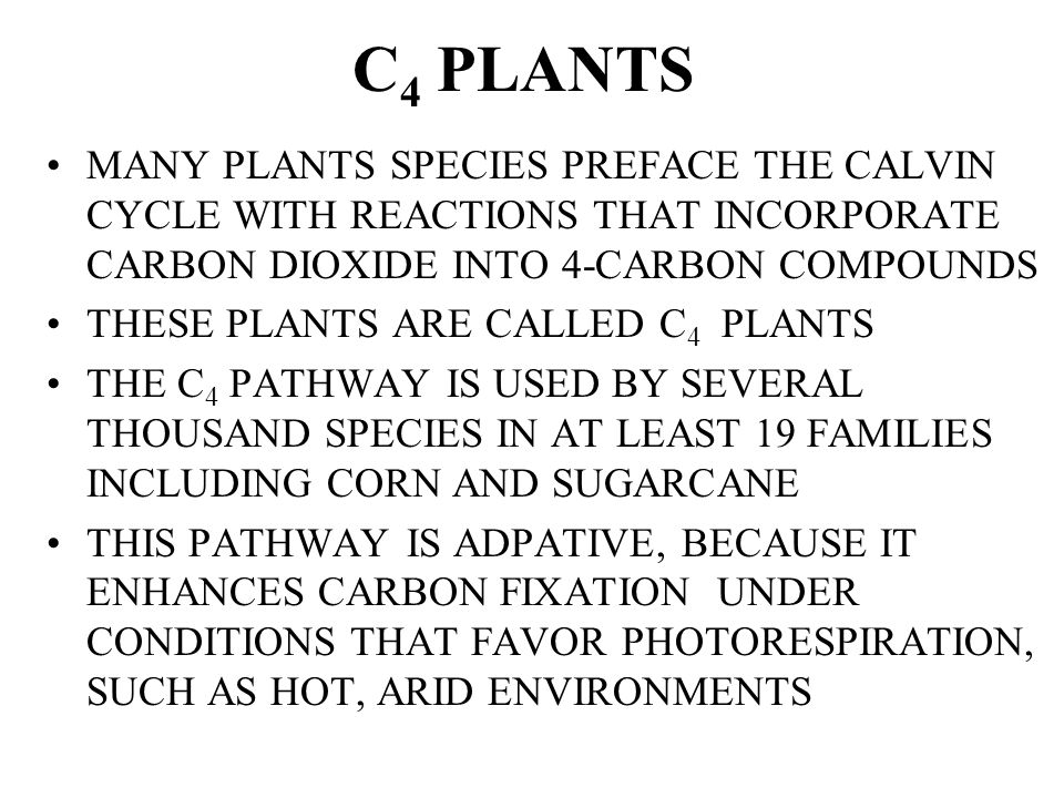C4 PLANTS MANY PLANTS SPECIES PREFACE THE CALVIN CYCLE WITH REACTIONS THAT INCORPORATE CARBON DIOXIDE INTO 4-CARBON COMPOUNDS.