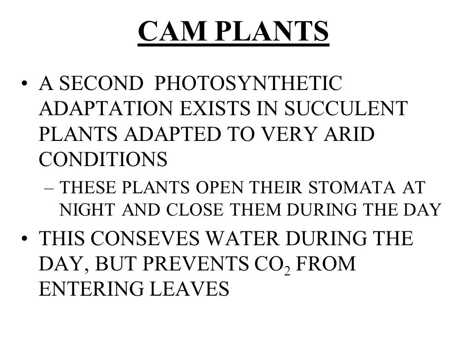 CAM PLANTS A SECOND PHOTOSYNTHETIC ADAPTATION EXISTS IN SUCCULENT PLANTS ADAPTED TO VERY ARID CONDITIONS.