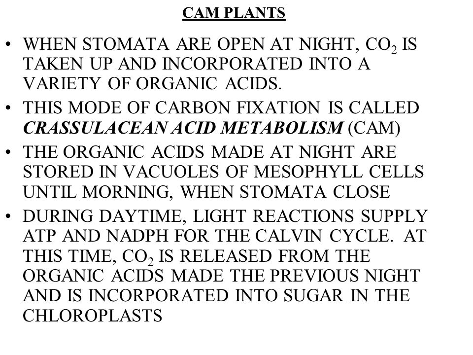 CAM PLANTS WHEN STOMATA ARE OPEN AT NIGHT, CO2 IS TAKEN UP AND INCORPORATED INTO A VARIETY OF ORGANIC ACIDS.