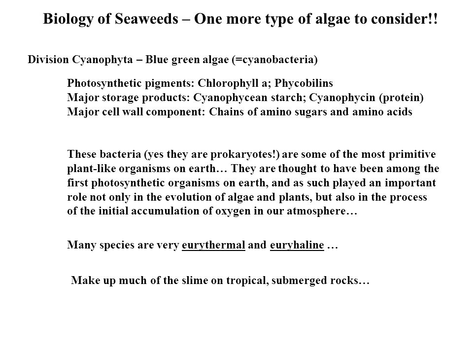 Biology of Seaweeds – One more type of algae to consider!!