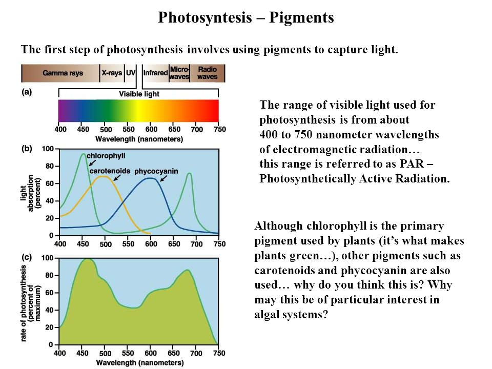 Photosyntesis – Pigments