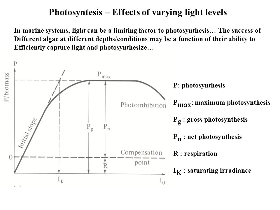 Photosyntesis – Effects of varying light levels