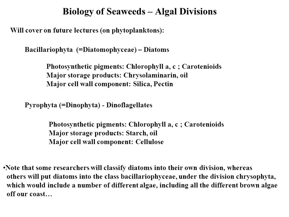 Biology of Seaweeds – Algal Divisions