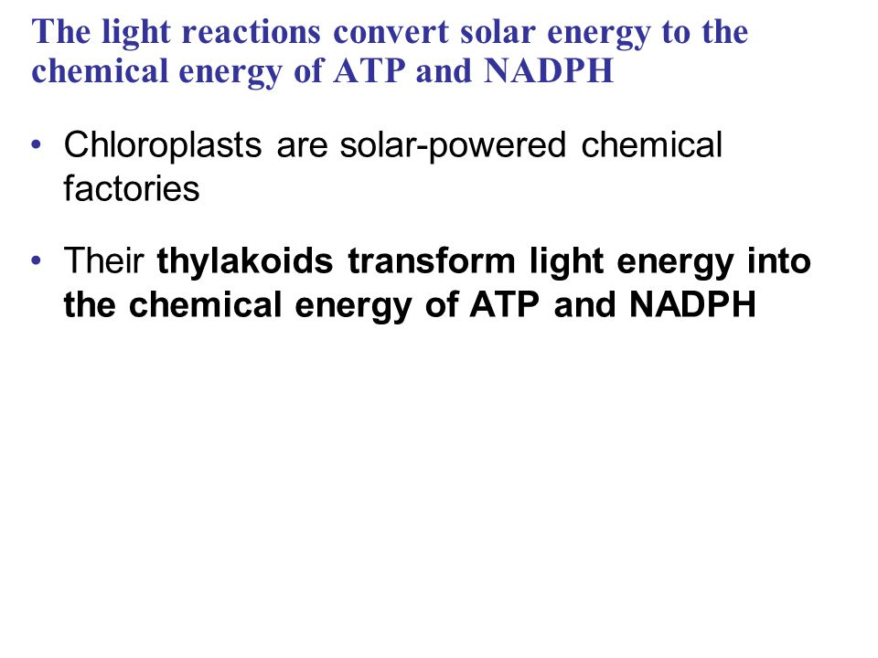 The light reactions convert solar energy to the chemical energy of ATP and NADPH