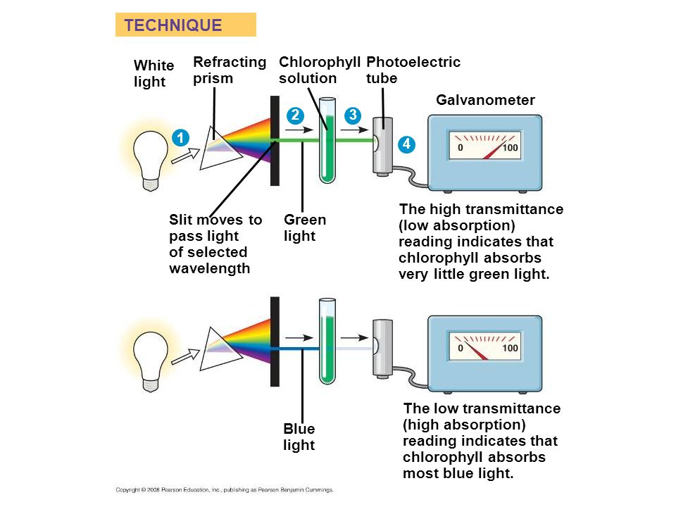 TECHNIQUE White light Refracting prism Chlorophyll solution