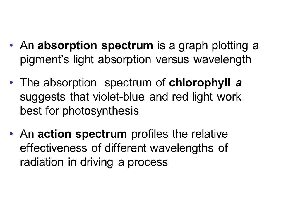 An absorption spectrum is a graph plotting a pigment's light absorption versus wavelength