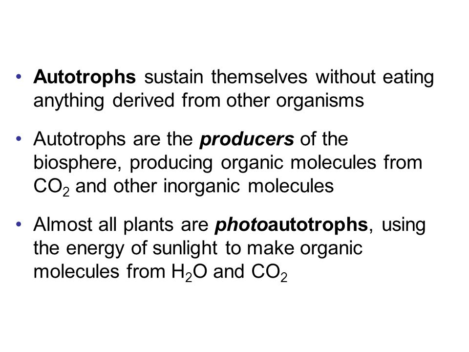 Autotrophs sustain themselves without eating anything derived from other organisms