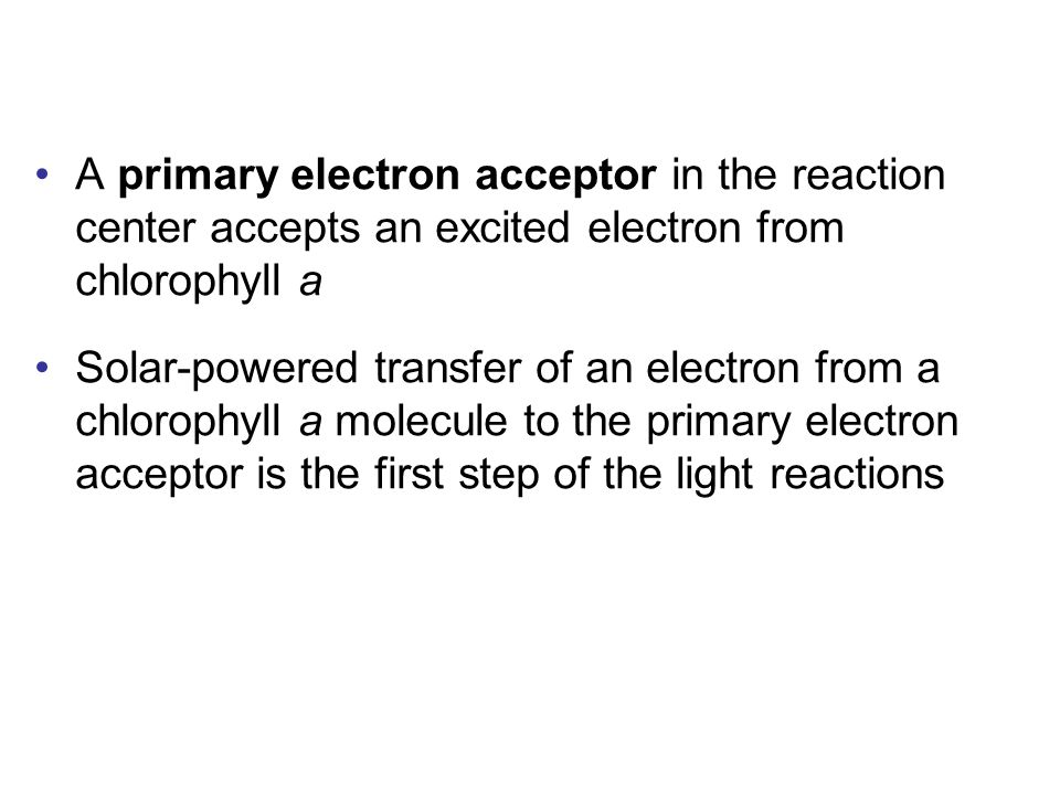 A primary electron acceptor in the reaction center accepts an excited electron from chlorophyll a