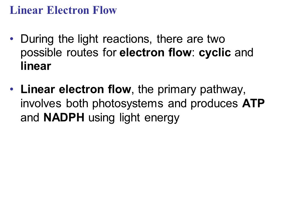 Linear Electron Flow During the light reactions, there are two possible routes for electron flow: cyclic and linear.
