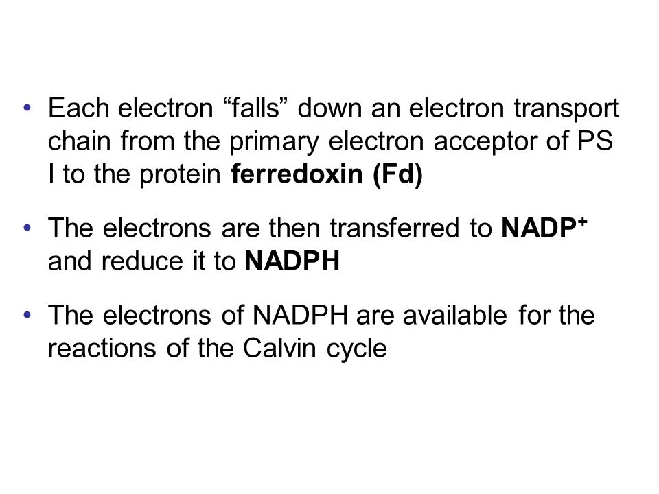 Each electron falls down an electron transport chain from the primary electron acceptor of PS I to the protein ferredoxin (Fd)