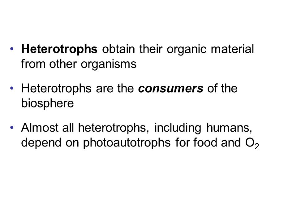 Heterotrophs obtain their organic material from other organisms