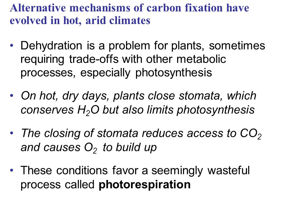 Alternative mechanisms of carbon fixation have evolved in hot, arid climates
