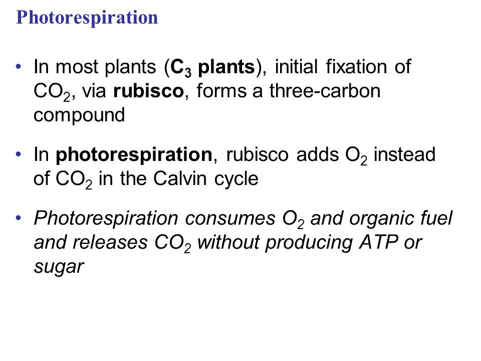 Photorespiration In most plants (C3 plants), initial fixation of CO2, via rubisco, forms a three-carbon compound.