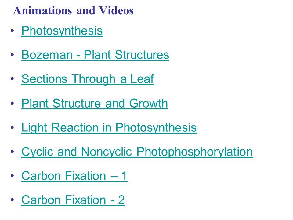 Animations and Videos Photosynthesis. Bozeman - Plant Structures. Sections Through a Leaf. Plant Structure and Growth.