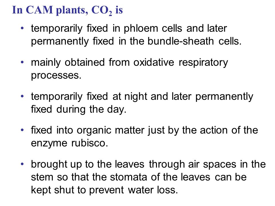 In CAM plants, CO2 is temporarily fixed in phloem cells and later permanently fixed in the bundle-sheath cells.