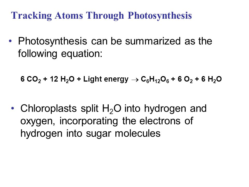 Tracking Atoms Through Photosynthesis