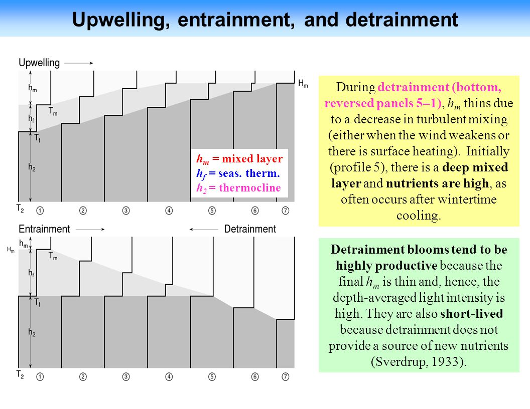 Upwelling, entrainment, and detrainment