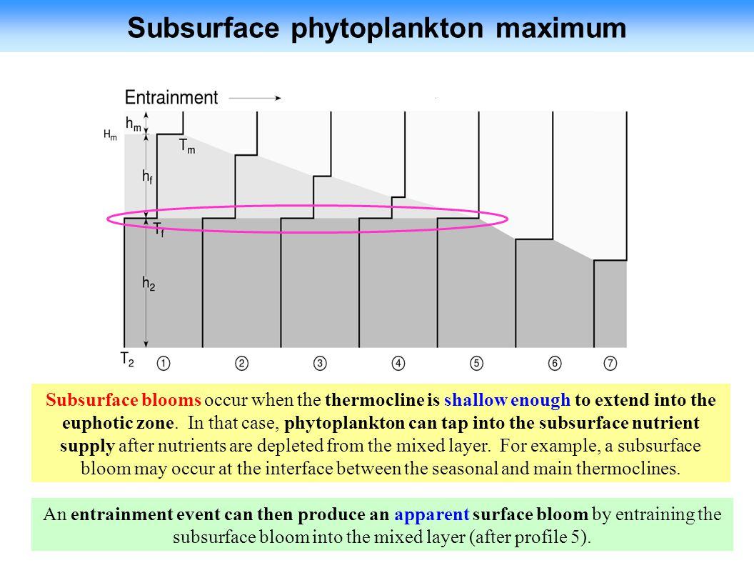 Subsurface phytoplankton maximum