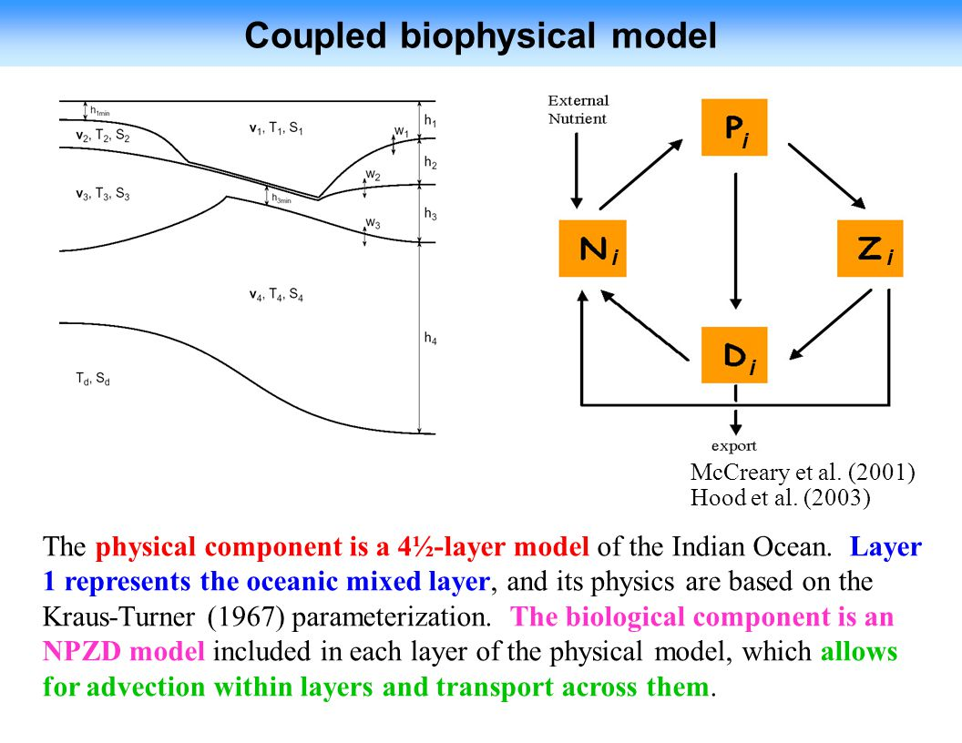 Coupled biophysical model