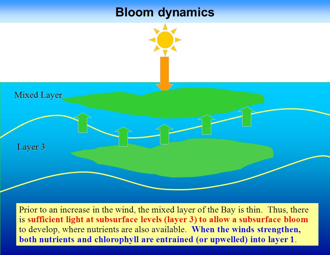 Bloom dynamics Mixed Layer Layer 3
