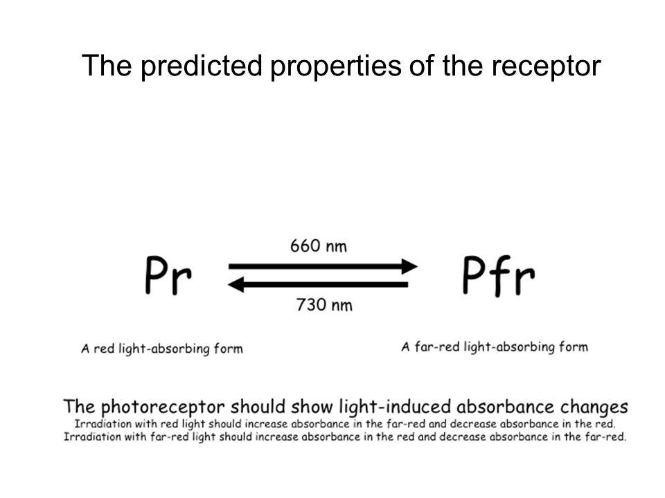 The predicted properties of the receptor