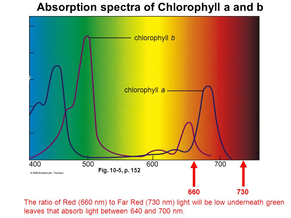 Absorption spectra of Chlorophyll a and b