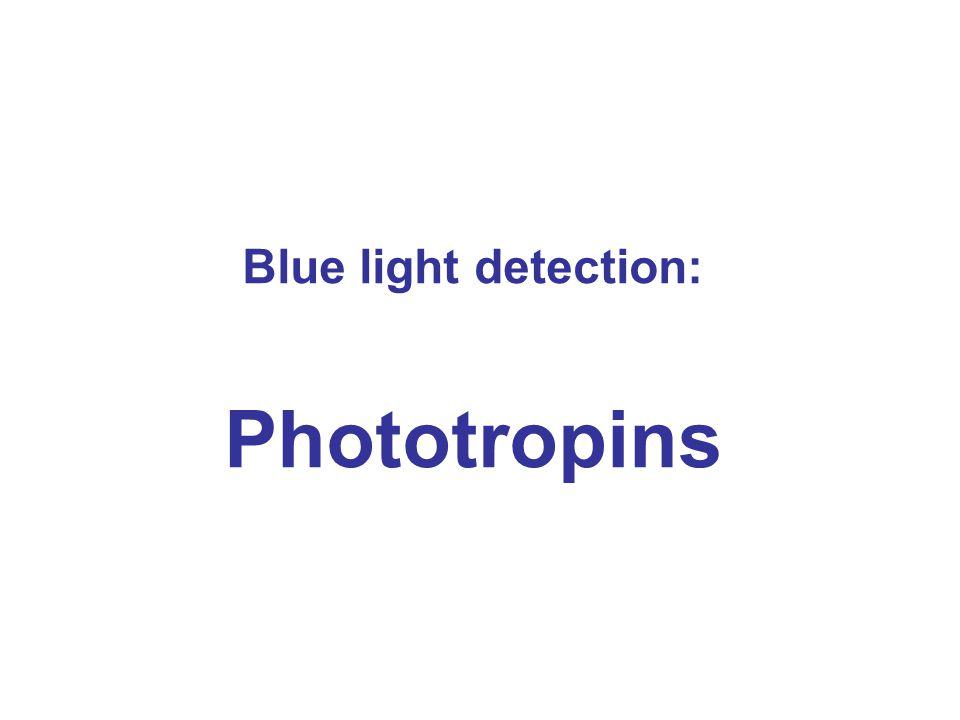 Blue light detection: Phototropins