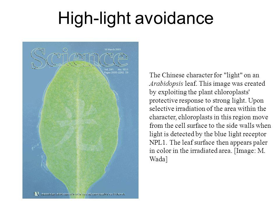 High-light avoidance