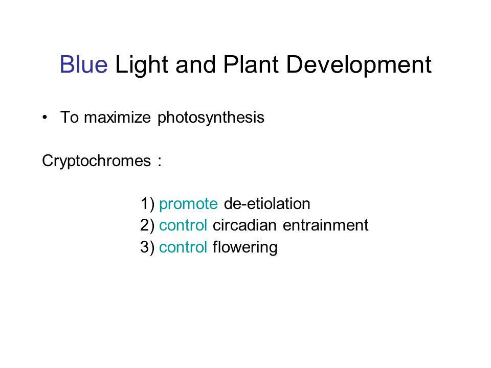 Blue Light and Plant Development