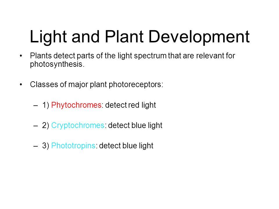 Light and Plant Development