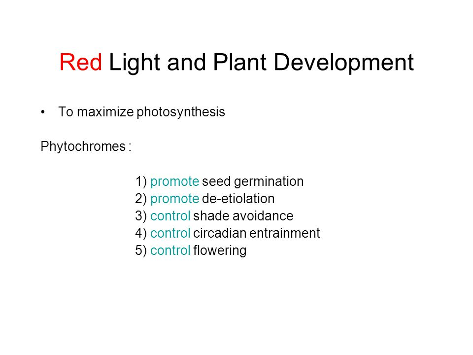 Red Light and Plant Development