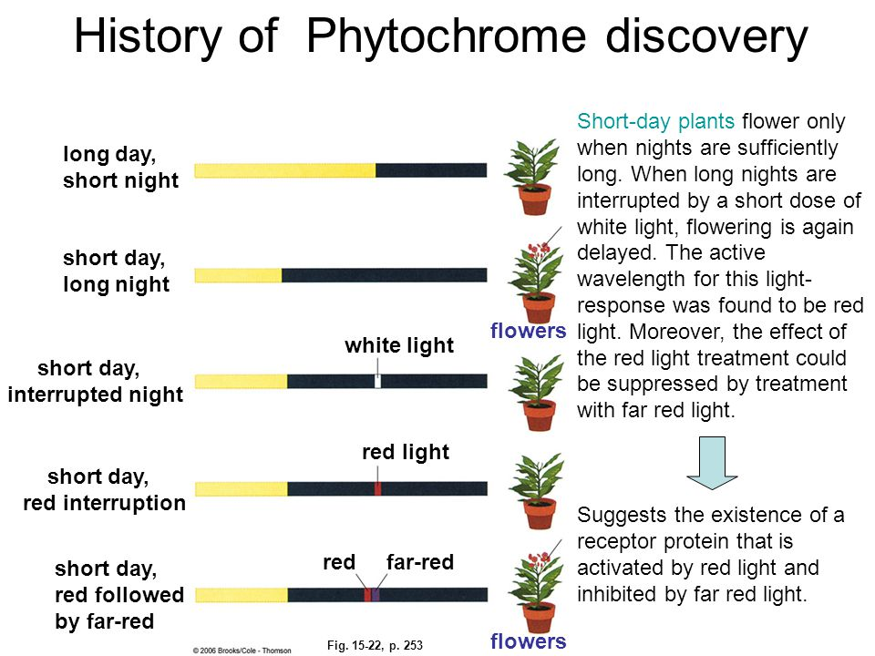 History of Phytochrome discovery