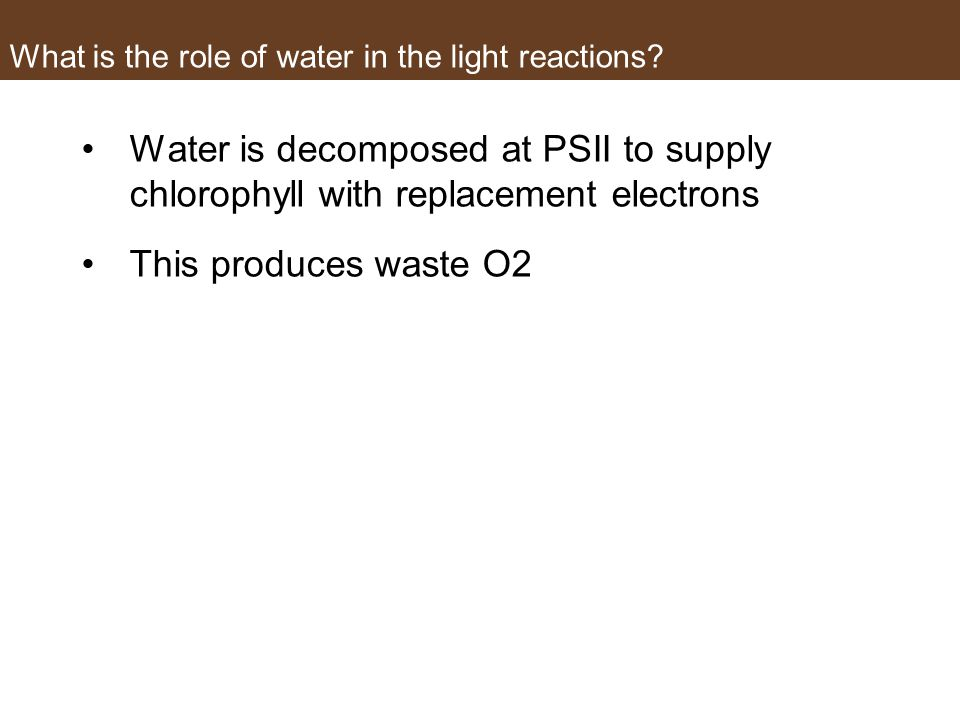 What is the role of water in the light reactions