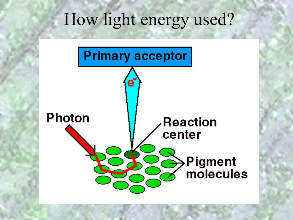 How light energy used