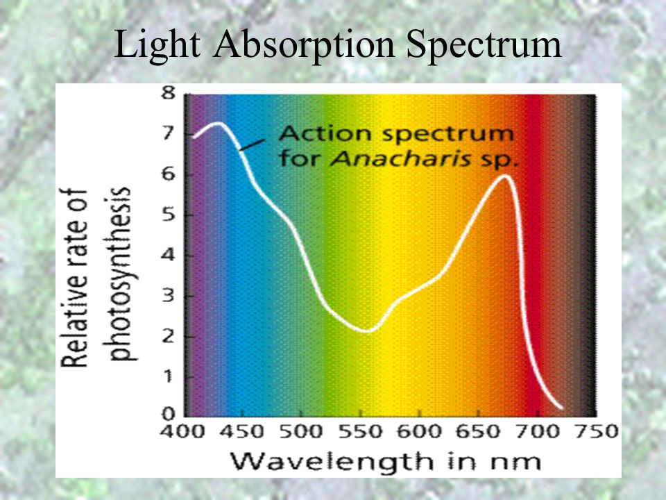 Light Absorption Spectrum