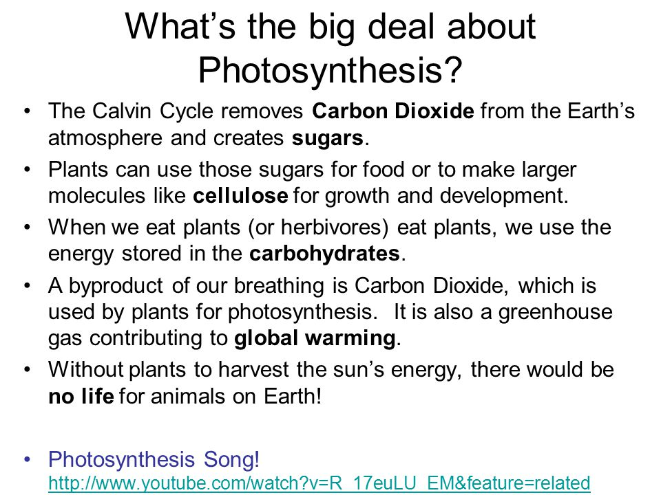 What's the big deal about Photosynthesis