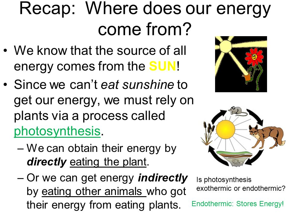 Recap: Where does our energy come from