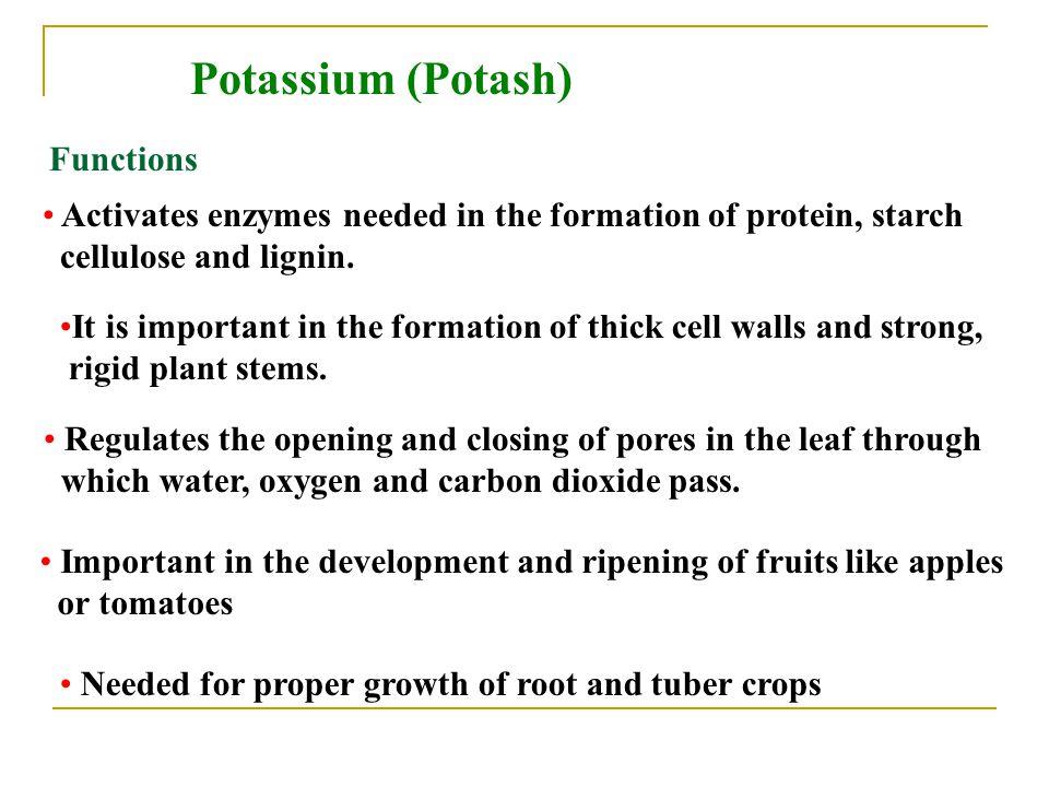 Potassium (Potash) Functions
