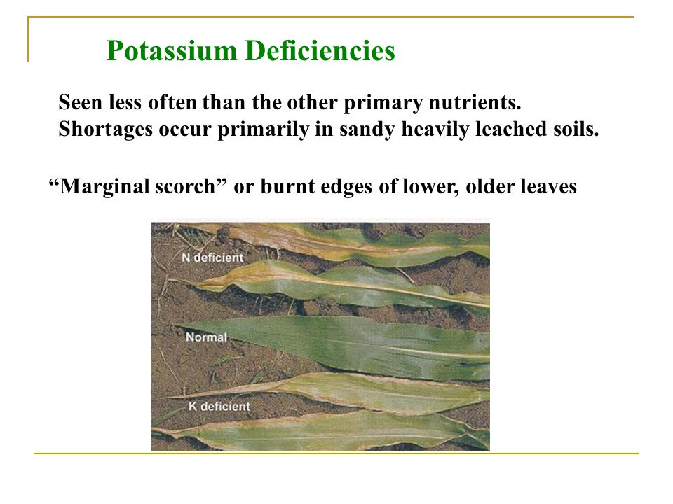 Potassium Deficiencies
