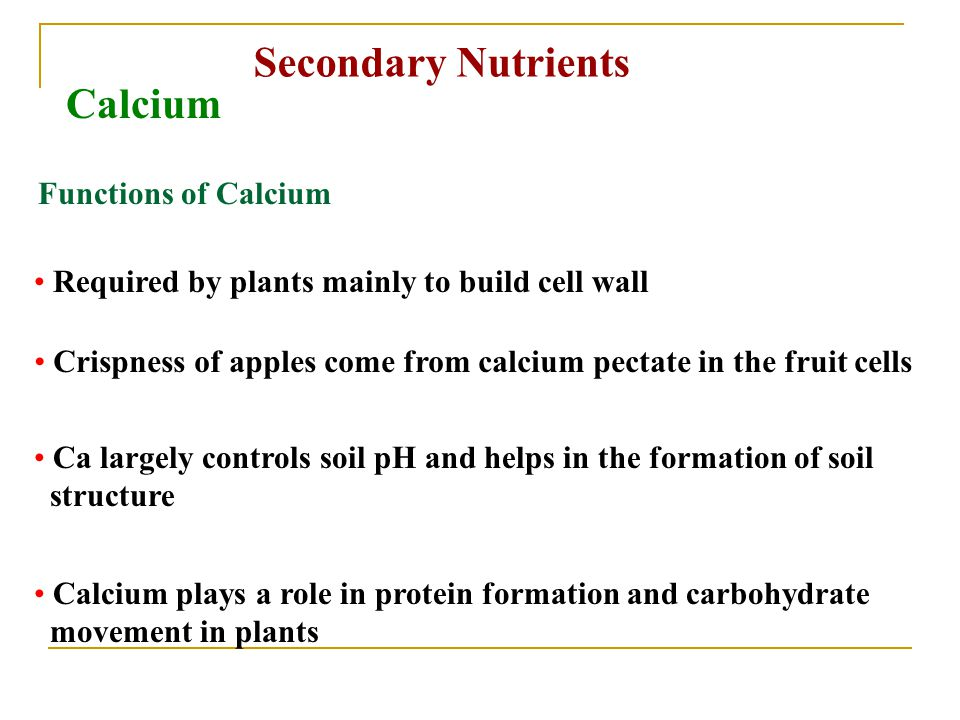 Secondary Nutrients Calcium Functions of Calcium