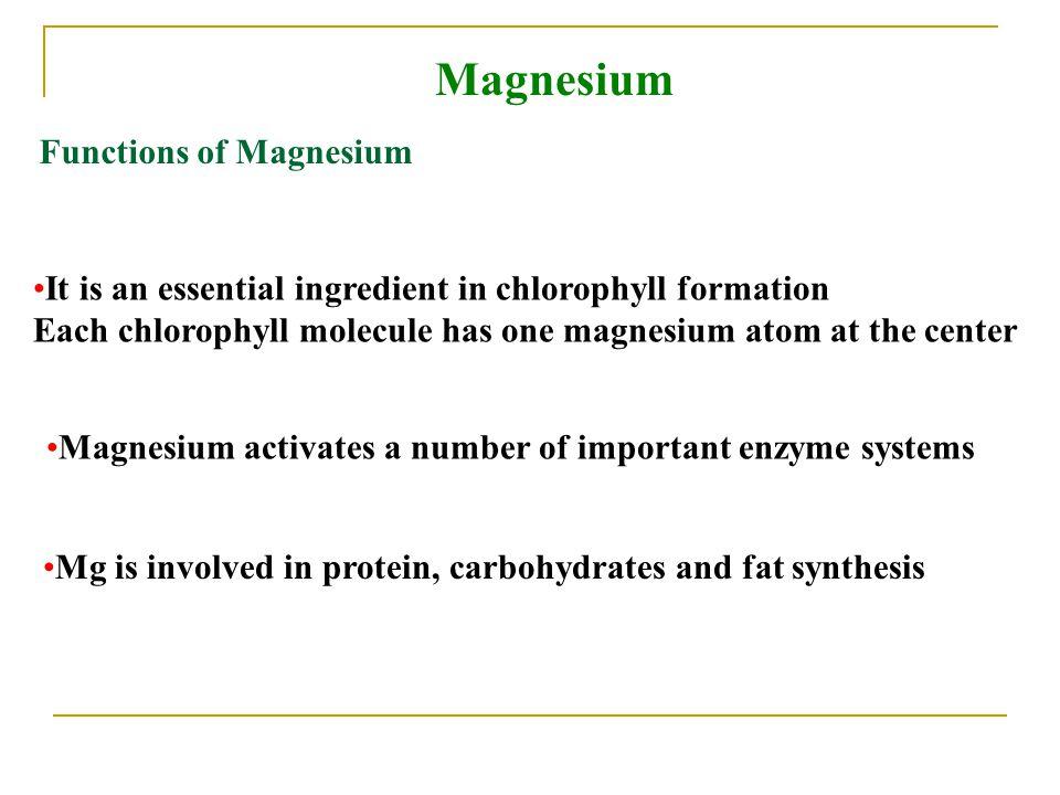 Magnesium Functions of Magnesium