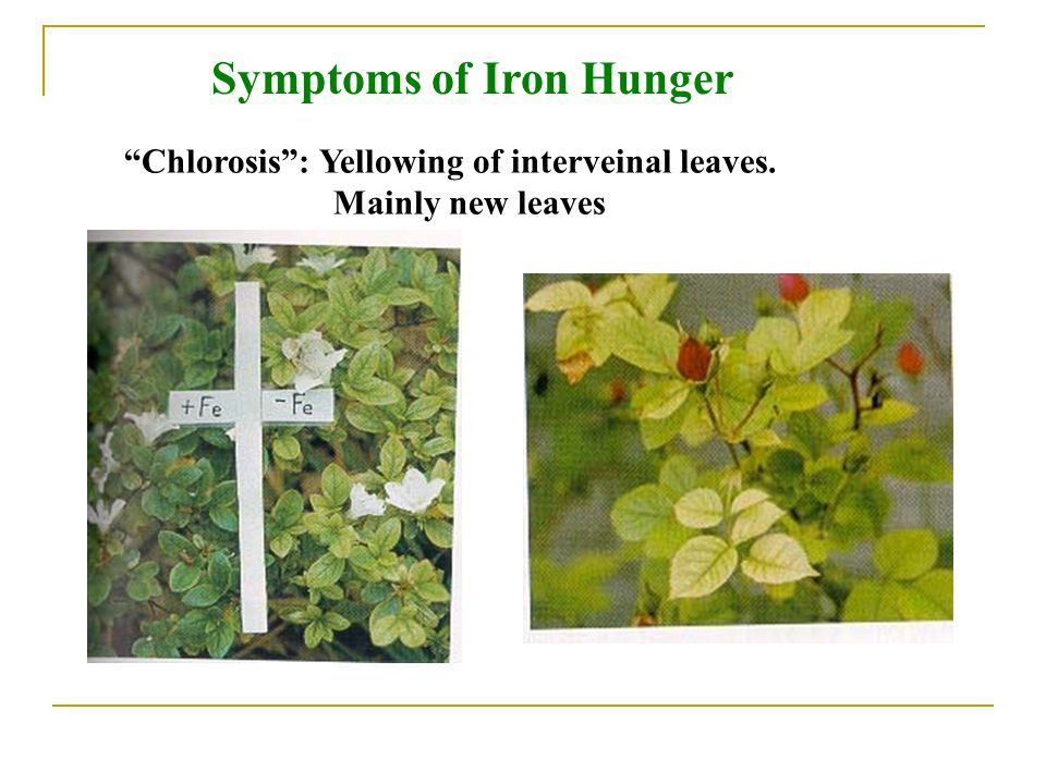 Symptoms of Iron Hunger